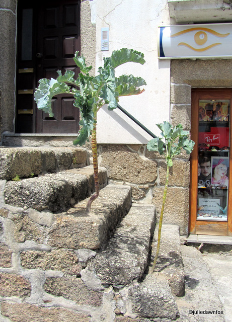 cabbage trees growing out of stone steps